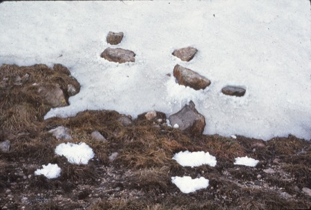 Rock Snow Transfer